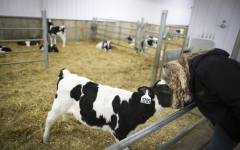 High-Tech Feeders Free Dairy Farmers