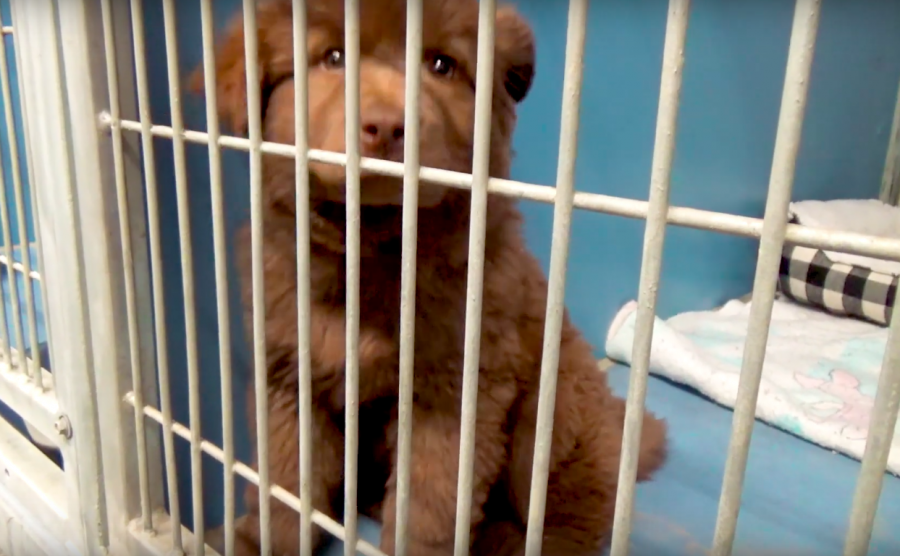 The Viewpoint staff takes on the Animal Shelter