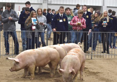 Nearly 500 students attend district livestock judging contest at Northeast Community College