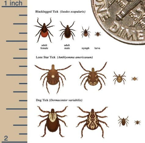 Tick Season is Coming Sooner than Usual