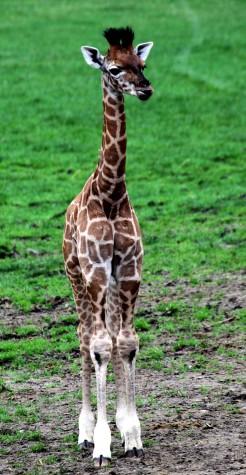 Zoos' dirty little secret