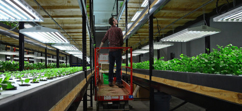 Aquaponic Company Produces Organic Vegetables Year-Round