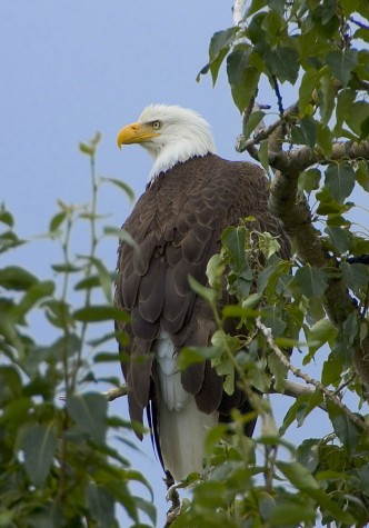 Half Of North American Bird Species Threatened By Climate Change