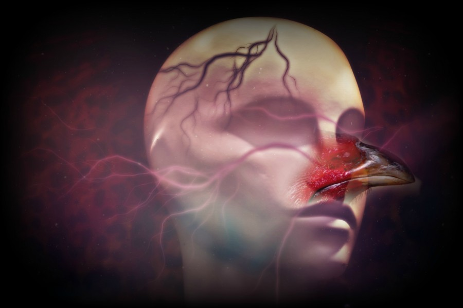 Poultry+Psychoanalysis