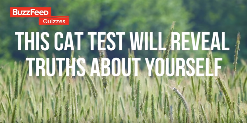 This cat video will reveal your true personality!