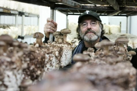 The mushroom dream of a 'long-haired hippie' could help save the world's bees