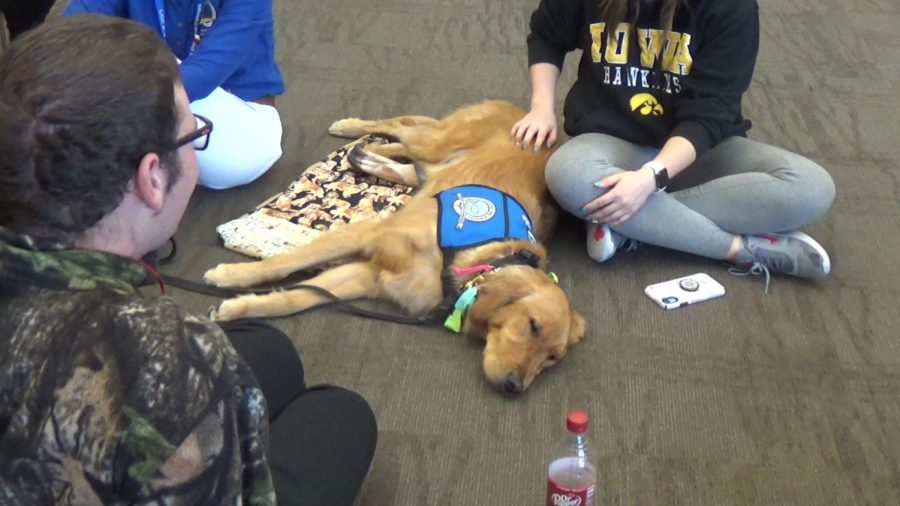 Comfort dogs come to Northeast for suicide prevention week