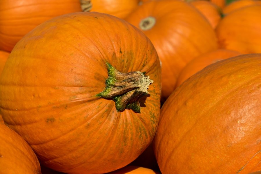 Pumpkin Sets New State Record