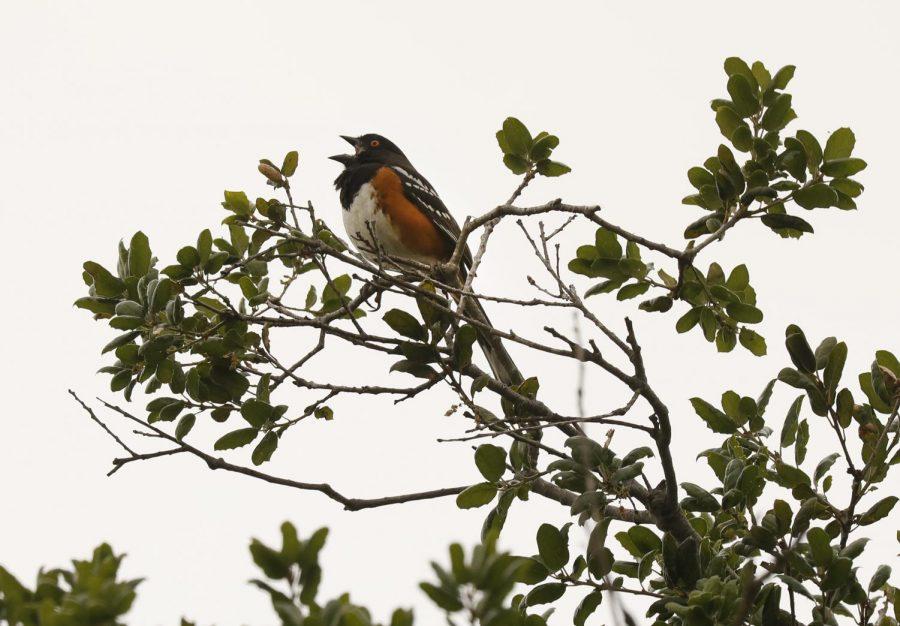 As humanity hides from coronavirus, wildlife reclaims lost territory